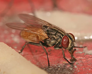 flies and fly control